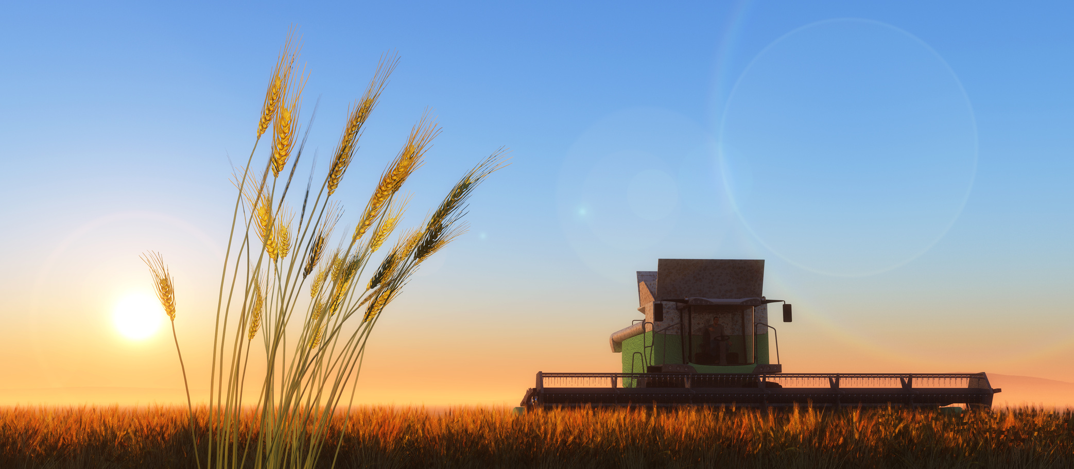 wheat harvester working in wheat field